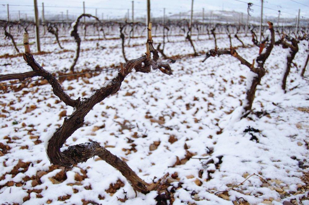 Image via Rioja Wine UK