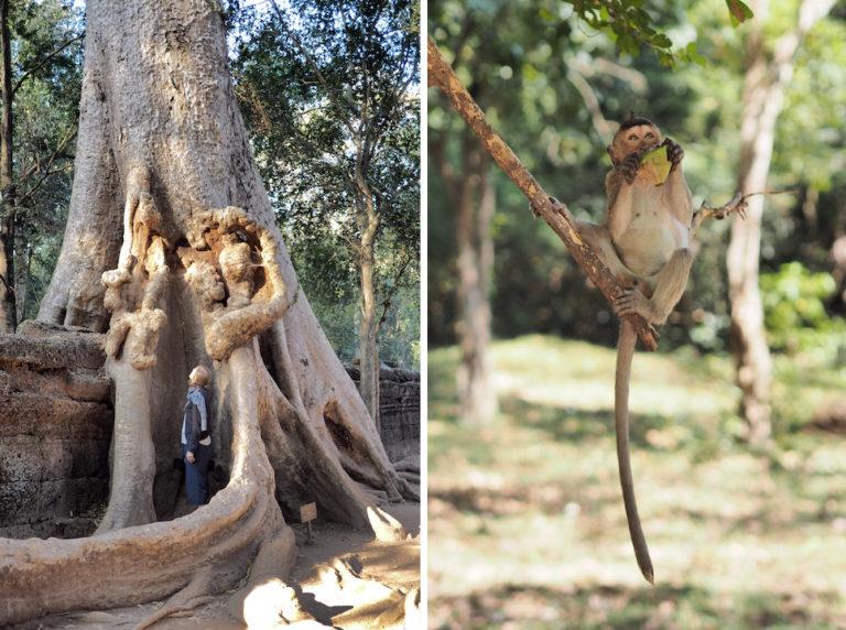 ta-phrom-monkey