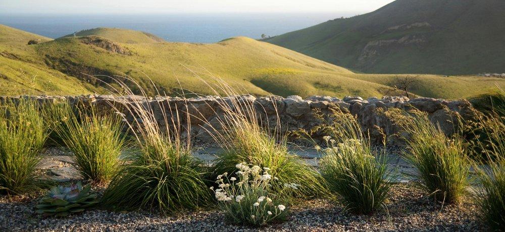 hollister-6-grasses-ocean.jpg