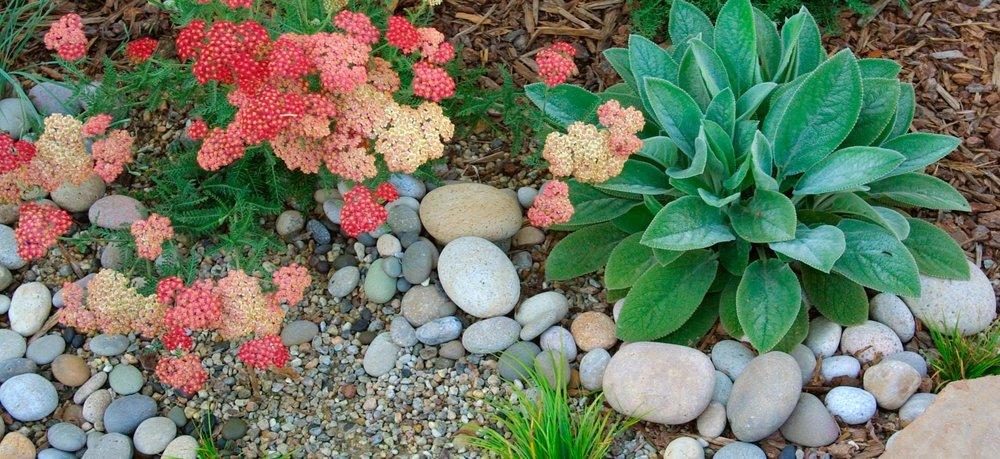 1-stone-plant-detail.jpg