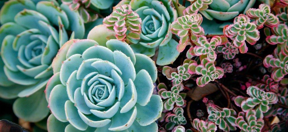 5-succulents.jpg