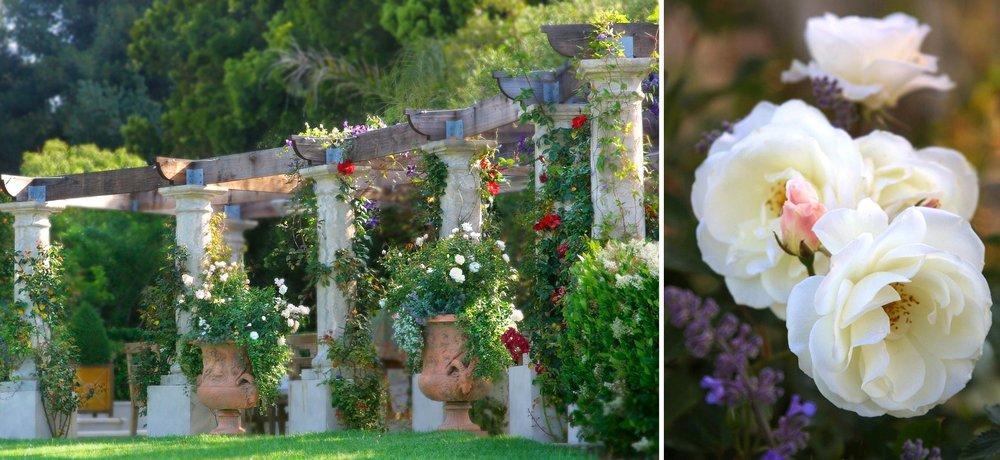 3-pergola-roses.jpg
