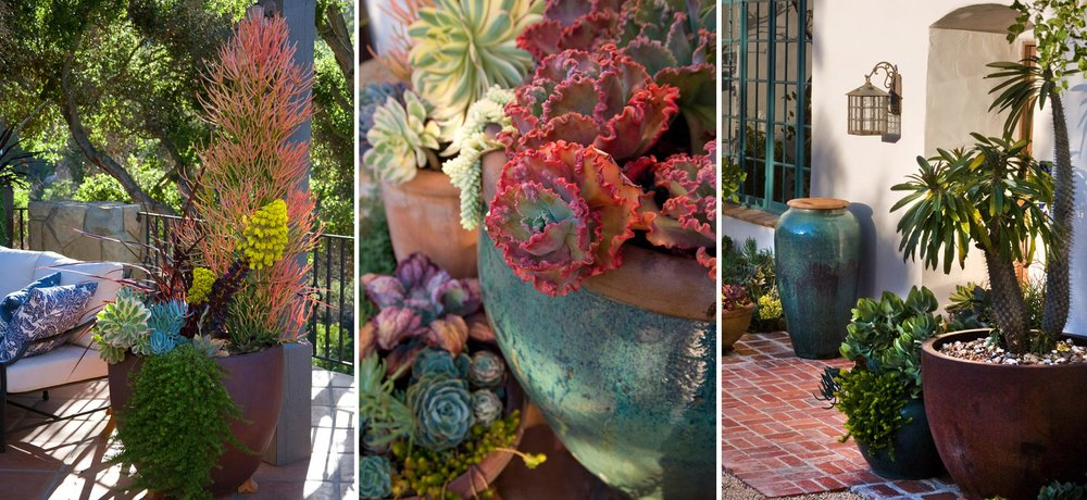 5-potted-succulents.jpg