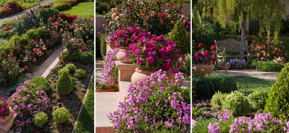 3-rose-garden-potted.jpg