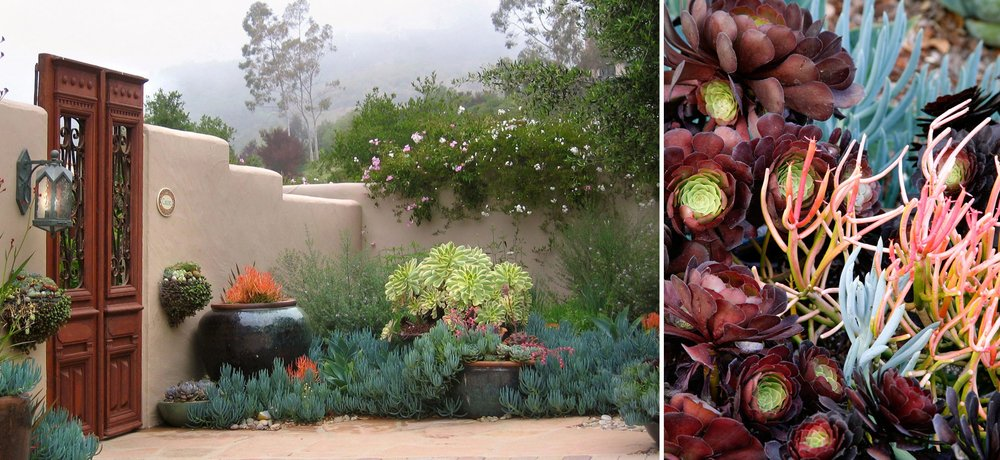 5-gate-entry-succulents.jpg