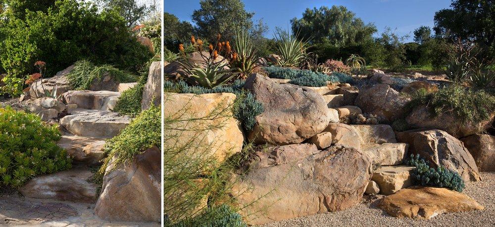 succulent-1.jpg
