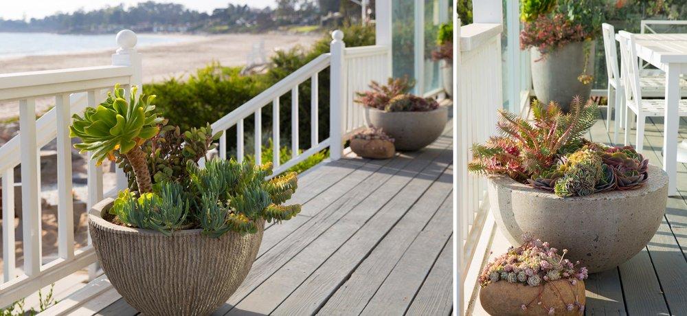 beach-retreat-potted-succulents-1.jpg