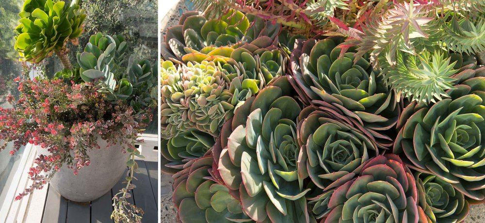 potted-succulents-3.jpg