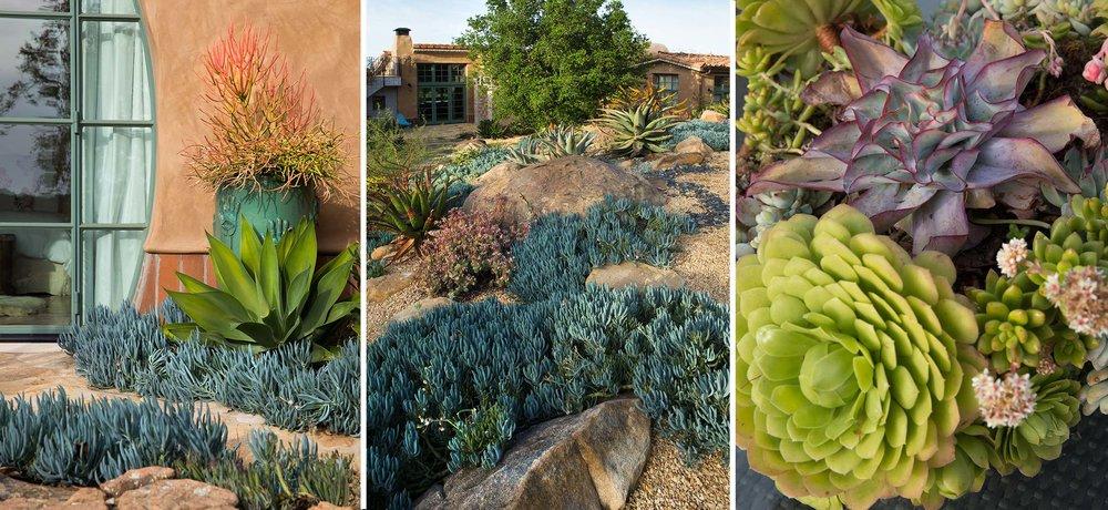 3-succulent-garden.jpg