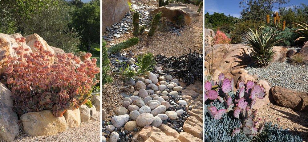 succulents-4.jpg