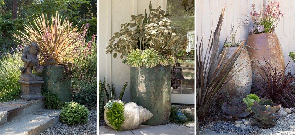 pots-grasses.jpg