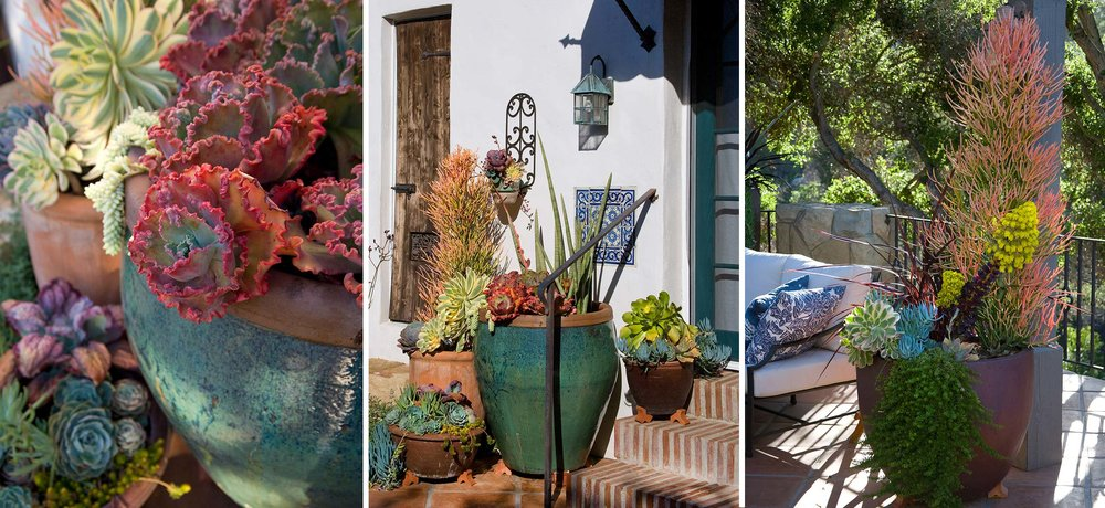 succulent-pots.jpg