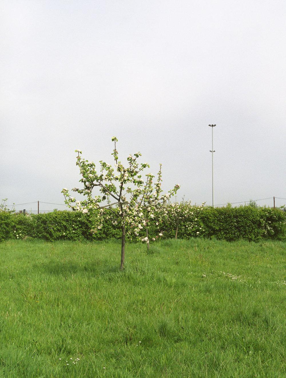 Blondin Community Orchard, London 2008