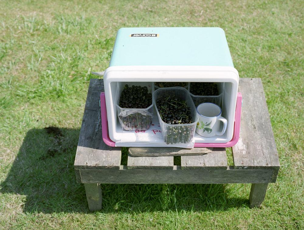 Blackcurrant Box, Sussex, 2008