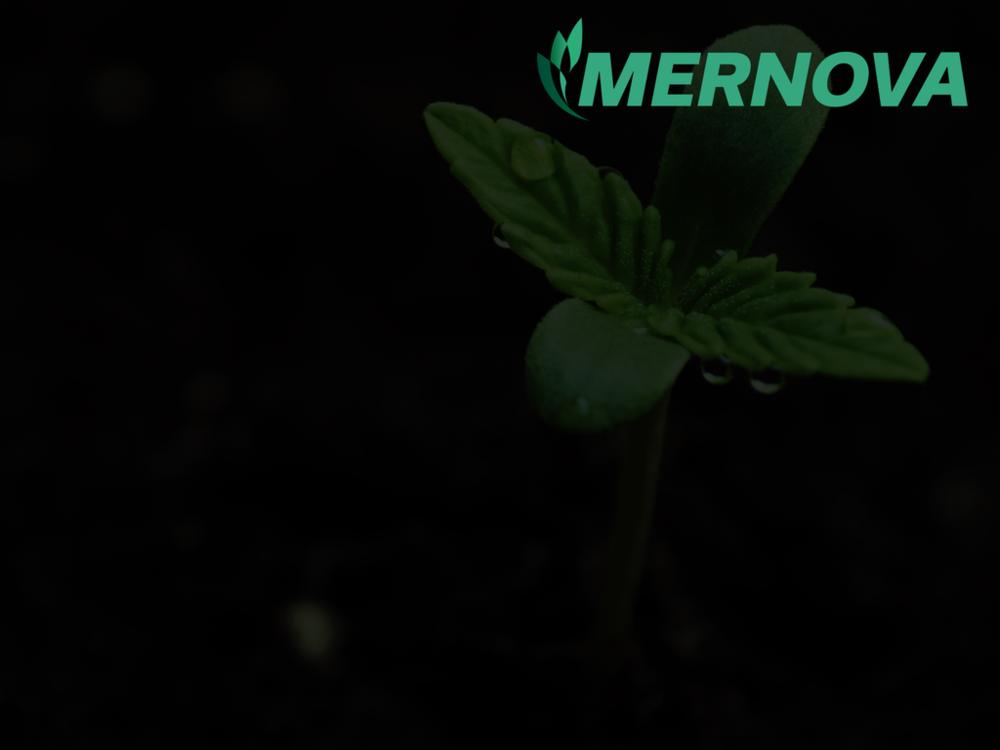 Mernova - Branding + Web Design