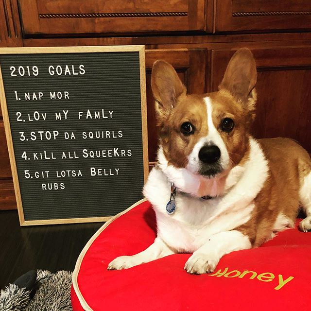 It's important to have goals...even for our Honey bear. Her resolutions for the year are ambitious to say the least, but nothing ventured, nothing gained, right? For 2018, I endeavored to make every recipe in each issue of @finecookingmag and the results were delicious, exhausting and finally, overwhelming. Read my blog about the journey {link in profile} and scroll to the right to see the beginnings of one of my 2019 goals - to spend more time in the kitchen WITH loved ones. My son @jamesandhisjourney and I put together a fabulous Italian feast last night featuring Meatballs on Grilled Polenta, Creamy Caesar Salad, Garlic Spinach and Bucatini with sweet Italian Sausage, Mushrooms and Rosemary (his personal signature dish from his time in Rome!) 2019 is off to a great start! ❤️ . . . . . . . . . #instapups #corgisofinstagram #corgi #texascorgi #instacorgi #resolutions #goals #lovewhatyoudo #eatwell #yum #yummy #instafood #dinner #pasta #meatballs #polenta #caesarsalad #italianfood #shoplocal #shopsmall #ifmylifewereapie #dallaseats