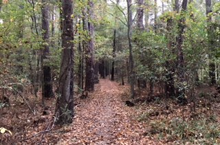 Yockanookany Trail - Reservoir/MadisonMultiple TrailheadsThis trail starts at the West Florida Boundary rest stop on the Natchez Trace Parkway at milepost 107.9 in Madison just 2 miles north of the Overlook rest stop and ends at the Highway 43 trailhead in Canton for 7.7 miles one way. The trail continues north past Canton, but it is not currently maintained. It is a single track heavily wooded trail that parallels the Natchez Trace Parkway. Hikers, runners, and horses use it, and it is maintained by the National Park Service. There are signposts along the trail, and in the first and third mile the trail runs up on the parkway over bridges for short distances before the trail reenters the woods. There is parking at both trailheads. The Frosty 15 is run on this section of the Yockanookany.