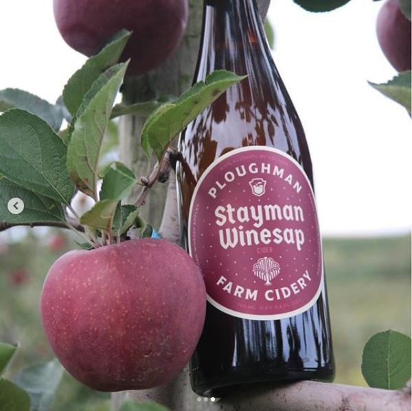 Ploughman-Stayman-Winesap-tree.png