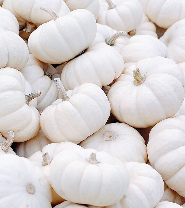 Tell me what your picture-perfect fall weekend looks like! Sunday is upon us and once autumn hits, I especially can't wait for the weekends. Every year I look forward to Sunday's spent at my favorite pumpkin patch and apple stop!  They also have a ton of these gorgeous white pumpkins 🎃 and I am sort of in love 😍 . . . #fallweekends #itsfallyall #pumpkin #flashes of delight #eventplanner #sundayrest #pumpkineverything