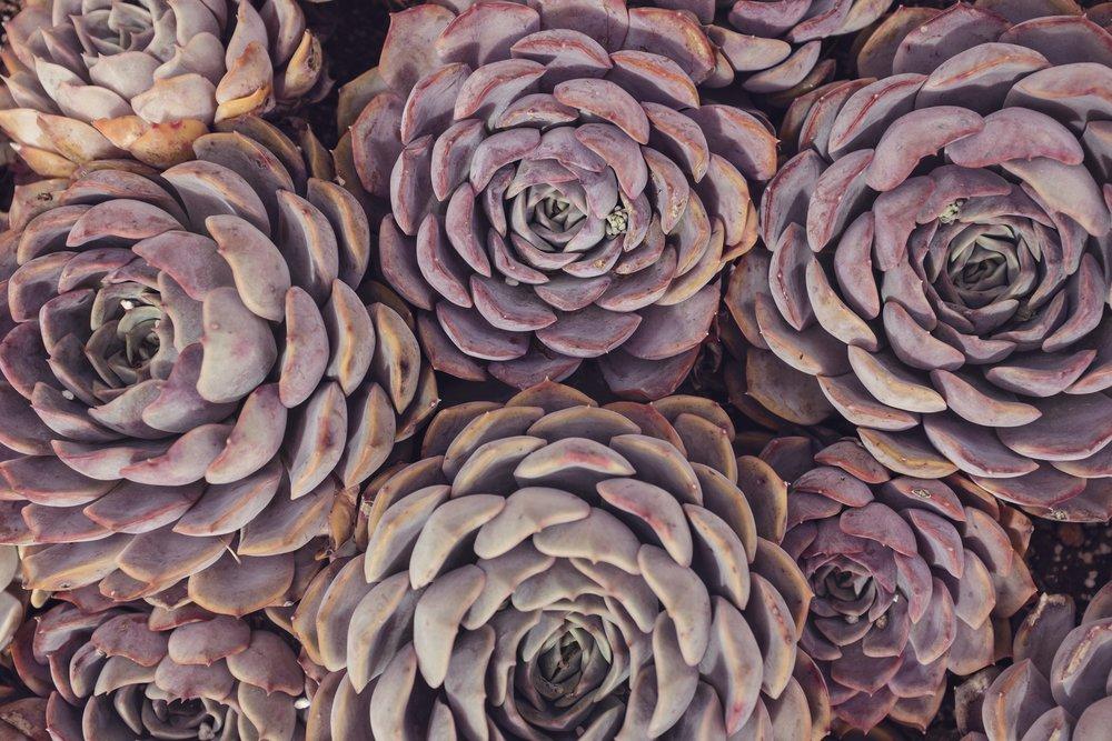 botanical 2.jpg