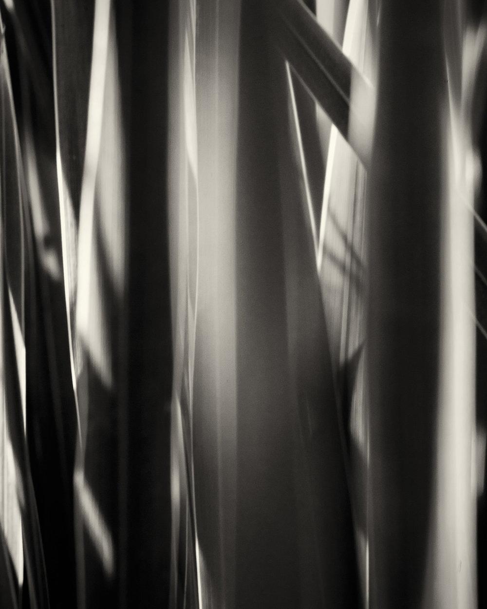1 Iris Leaves 1 Abstract Interior Design M Decor - affordable art