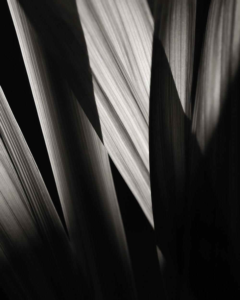 3 Iris Leaves 3 Abstract Interior Design M Decor - affordable art