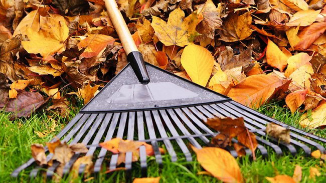 Leaf Raking Outreach - At the end of every Fall season our youth ministry will rake leaves for people in our community who aren't able to do it themselves.