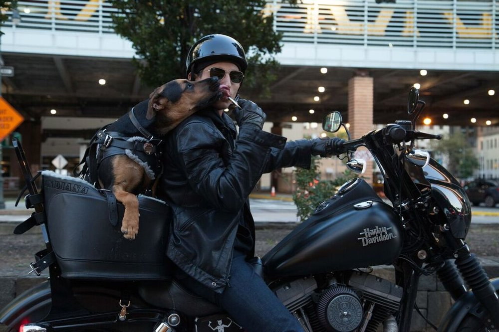 Pup + Motorcycle - Getting the dog trained to ride!
