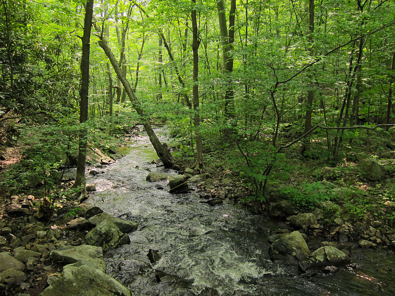 Landscape1 Northeast Woodlands.jpg