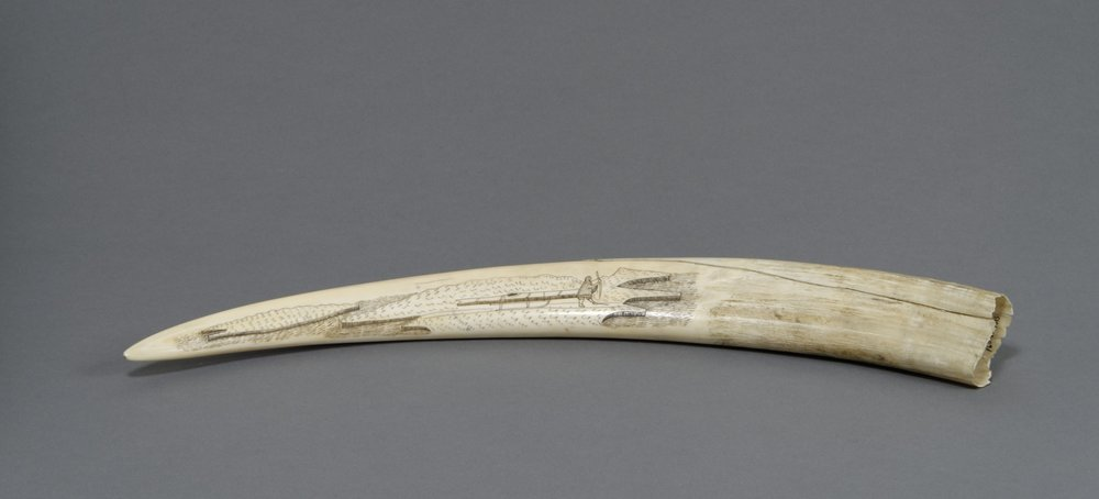 Iñupiaq or Yup'ik, scrimshaw walrus tusk (man pulling a kayak on a sled and walruses), early 20th century. Walrus ivory and pigment, 1 1/4 in. × 16 15/16 × 2 in. Hood Museum of Art, Dartmouth College: Gift of Mrs. A. Lincoln Washburn, Class of 1935W; 160.51.14615.