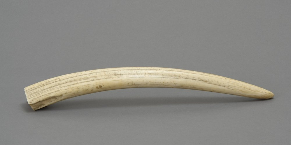 Alaska Native, polished walrus tusk, 20th century. Walrus ivory, 15 1/2 × 1 5/8 in. Hood Museum of Art, Dartmouth College: Transferred from Special Collections, Baker Library, Dartmouth College; 988.34.26953.