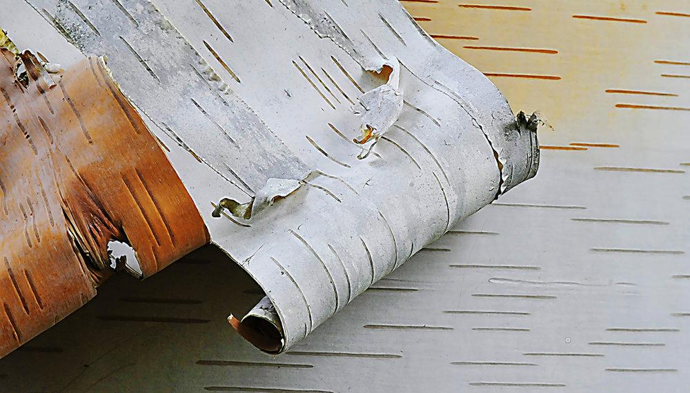 Birch Bark Scroll_0.jpg