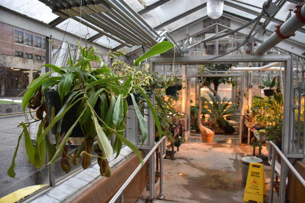 Inside the lower greenhouse. Photo by Alex Ganeev.