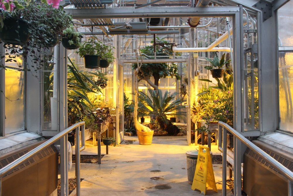 The greenhouse is open Monday through Friday to all UMD students looking to study or reduce stress before finals week. Photo by Tyler Schendel.