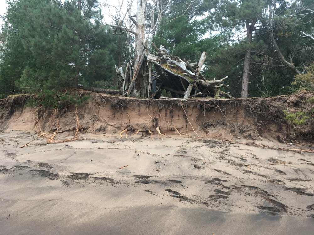 High lake levels cut into dunes on Park Point. Photo courtesy of Catherine Winter