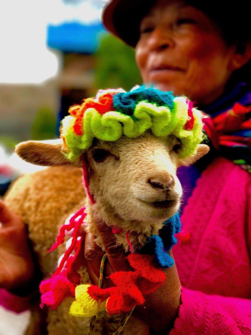 "Culture Winner: Jennifer Siv - ""Worship of the Lamb"" - Peru"