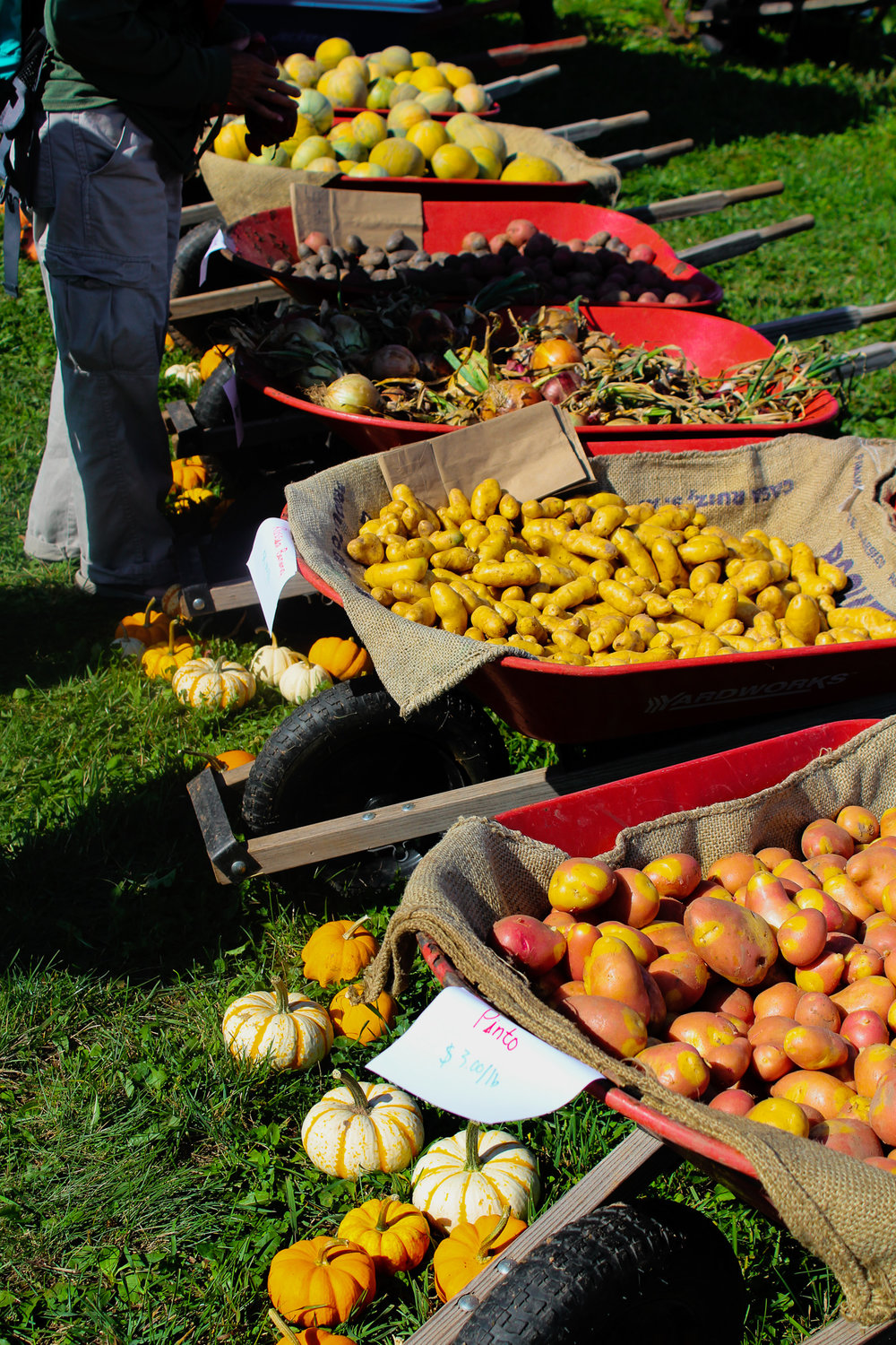 Fresh produce for sale. Photo by Morgan Pint