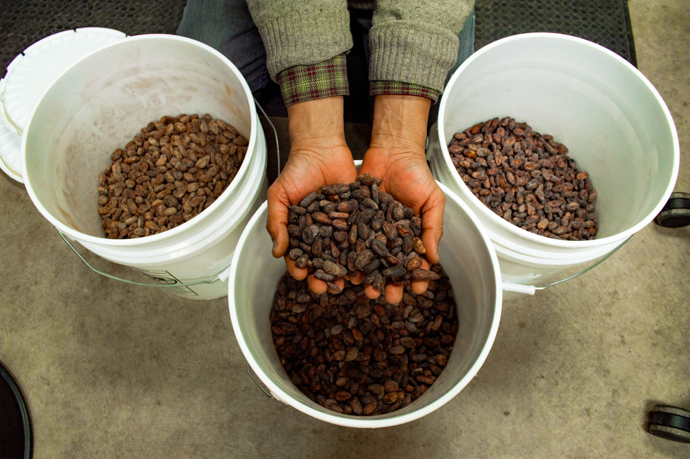 Cocoa beans after they have been roasted. Photo by Jake Barnard