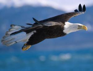 birdeagle2
