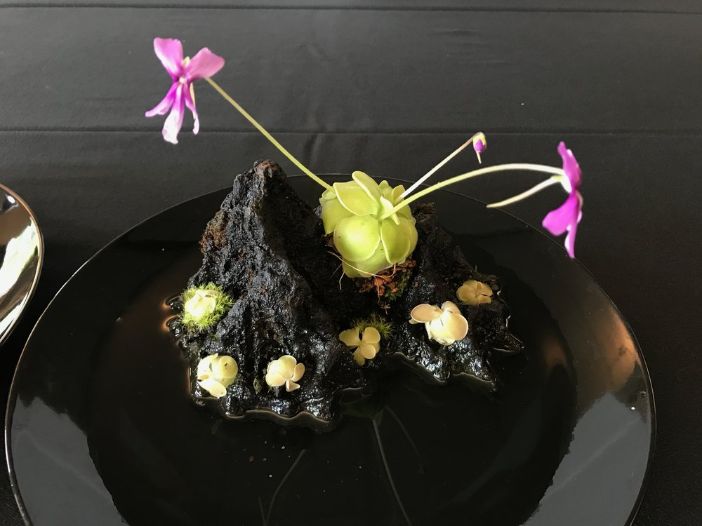 "A little  Pinguicula  display on a Japanese ""Shosuiseki"" rock."