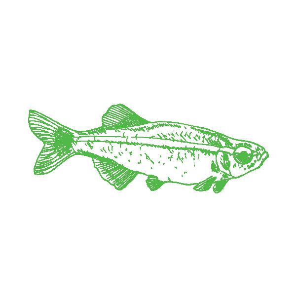 Fish 1R.png