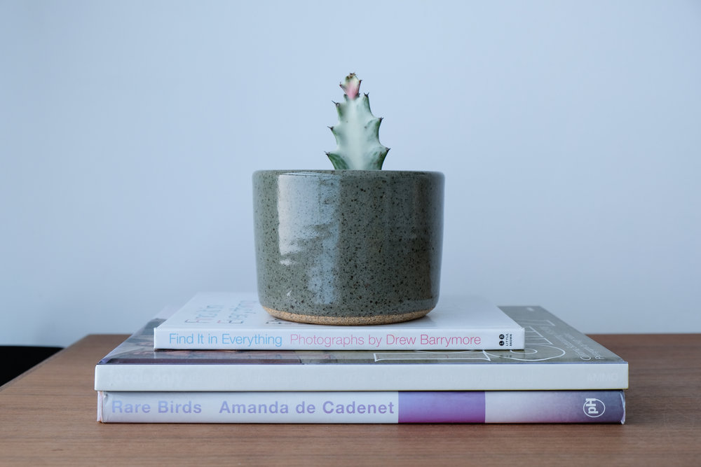 Helloooo adorable mini cactus!