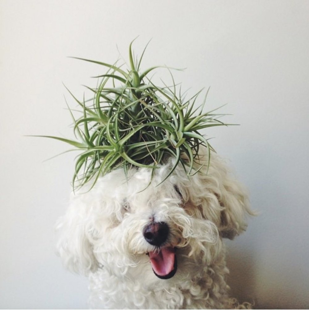 Source . My puppy will need to get a air plant do like this!