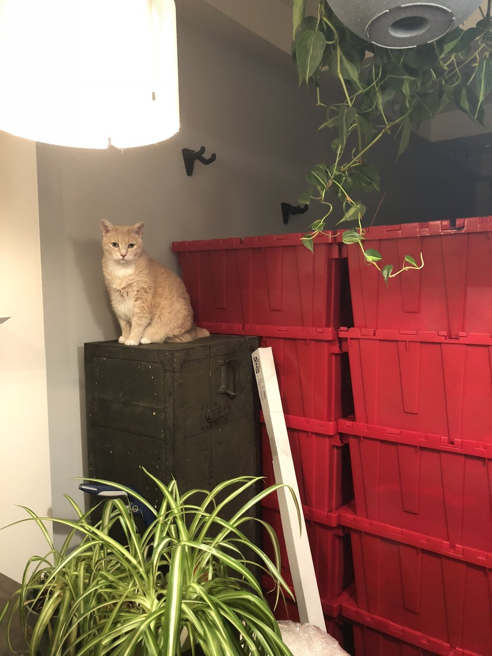 Ozzie is unsure about all of the madness and the bins from Jeff's apartment.
