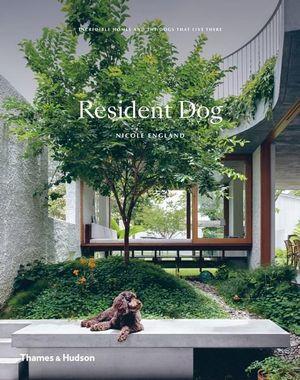 Resident Dog.jpg
