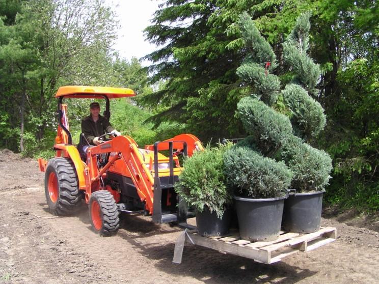 Arbres à planter dans le jardin contemporain