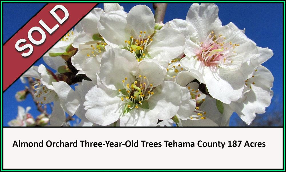 Walnut Orchard Tehama County California Sold