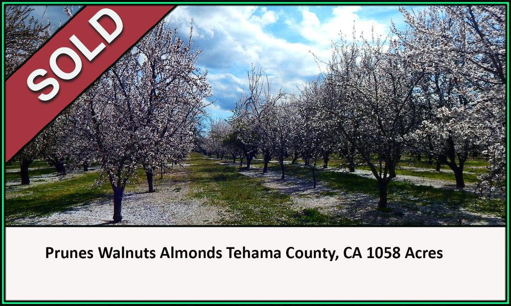 Prunes Almonds Walnuts Tehama County California