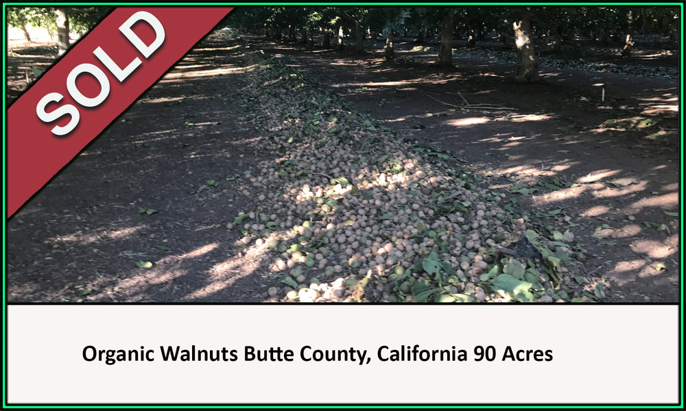 Organic Walnut Orchard Butte County California Sold