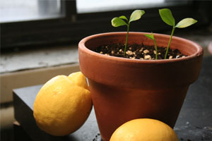 growing-seed-sml.jpg